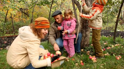 stock-footage-family-from-grandfather-mother-son-and-daughter-collects-apples-under-apple-tree-in-cardboard-box